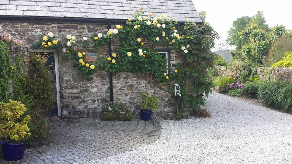 roses around door